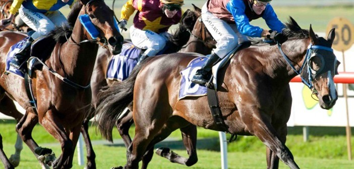 Prince Of Wales Stakes – What History Says