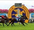 Rommel - Zeditave Stakes