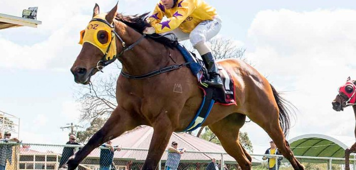 Ascot – The Stats 7 March 2015