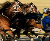 Ernie Manning's Bridgetown Harness Selections