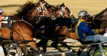 Ernie Manning's Wagin Harness Selections