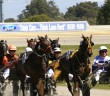 pinjarra harness 1