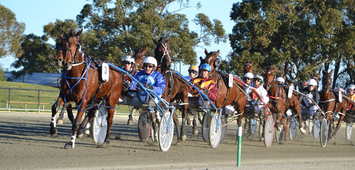 Ernie Manning's Pinjarra Harness Selections