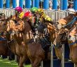 ascot-barriers