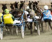 Ernie Manning's Williams Harness Selections