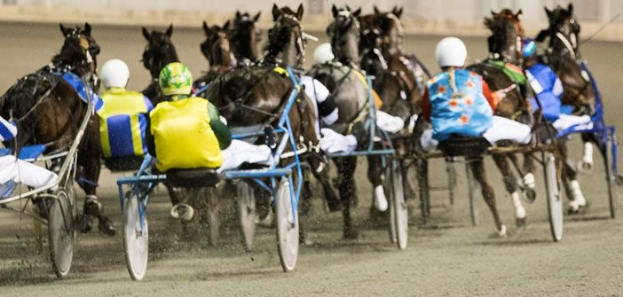 Ernie Manning's Narrogin Harness Selections