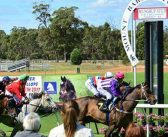 Barzinho To Rebound In Mount Barker Cup Says Gangemi