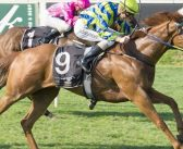 Star Mare Ellicazoom To Go Under the Hammer