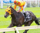 Harrison Has Perth Stakes Doubt With Jericho Missile
