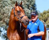 Long Leaf to stand at Rangeview Stud