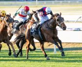 Dom To Shoot Draws Kingston Town Confidence